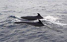Wakker worden met het gepiep van walvissen