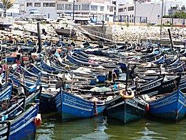 De kleine visboten liggen tot 40 dik gestapeld