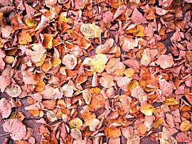 In de herfst vallen de bladeren van de boom