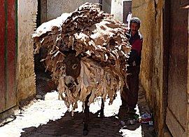 Ezels, paarden en handkarren zijn de transportmiddelen