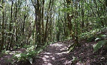 Park Garajonay, een zeldzaam horizontaal bospad