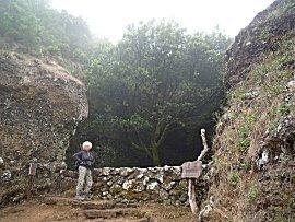 Garoe, heilige boom die de mist opvangt en daarmee een bron vult