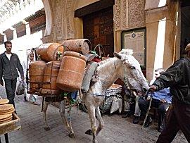 Muildier brengt gasflessen de oude Medina van Fes in