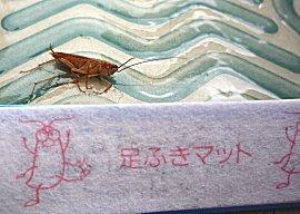 Marokaanse kakkerlak gevangen, wat staat er in het chinees ?