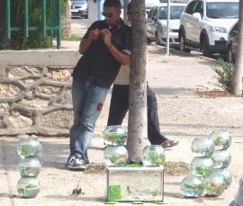 Geen gekheid, gezien in Agadir Marocco op de dag dat Willem Duis overleed, een fan met goudviskommen die de straat op ging