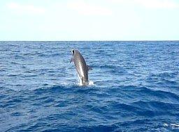 kllk op de foto voor een filmpje van de pilot whales.