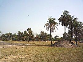 Landschap van grasland, palmen, cashew, mango, vijg, baobap, kapok bomen langs mangrove creek van Bintang bolon