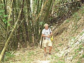 Erik in het bamboebos.