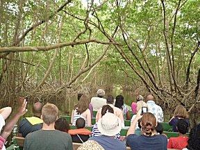 Boottochtje door de mangrove bij Caroni swamp