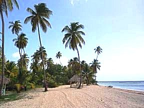 Crownpoint, tropisch wit strand met palmbomen.