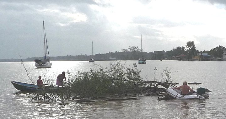 Een eiland van bomen, takken en zoetwater hyacint belaagt de geankerde boten.