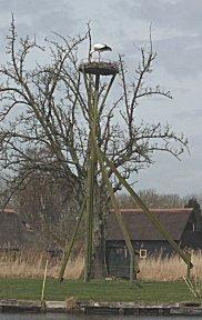 Meerder ooievaarsnesten in Giethoorn