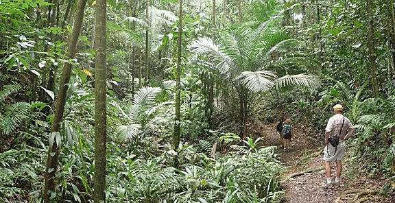 Gilpin trail een prachtige wandeling door tropisch regenwoud.