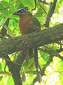 Mot mot, een van de vele vogels die we zagen.