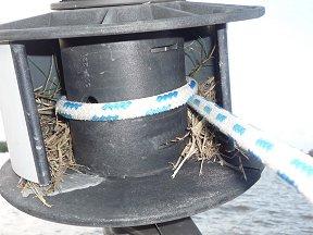 Een zwaluwnest in aanbouw in de rolfok