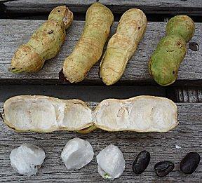 Het vruchtvlees van sweetbonki smaakt een beetje als Lychee