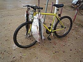 Grote vissen kunnen er worden gevangen in Suriname rivier