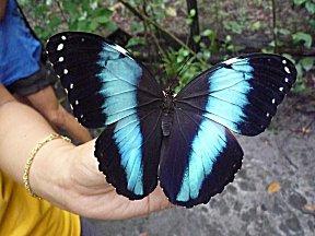 Een van de vele vlinders in de vlindertuin.