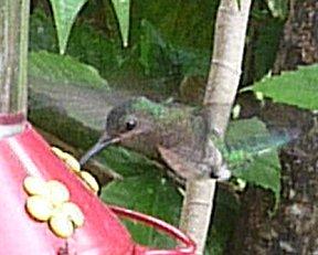 Vanaf de waranda naar de kolibri's kijken